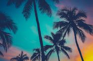 Stock Photo of hawaii palm trees at sunset