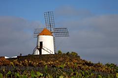 Cactus windmills   africa spain   and  sky Stock Photos