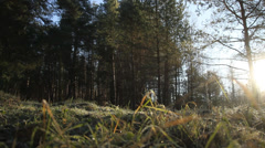 Bottom view of forest Stock Footage