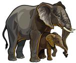 Stock Illustration of elephant with baby