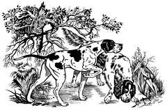 Pointer and setter illustration black white Stock Illustration