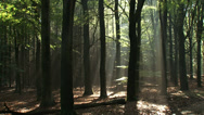 Stock Video Footage of Celestial rays penetrate the canopy of a beech forest in The Netherlands