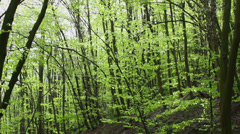 Early pring in deciduous forest Stock Footage