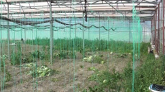 Panning inside of greenhouse Stock Footage