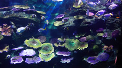 Siam Ocean World. Stock Footage