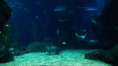 Siam Ocean World - stock footage