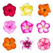 set of azalea flowers - stock photo