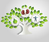 Kidneys and tree, healthy lifestyle concept Stock Illustration