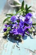 Pretty lobelia flowers on the old rustic wooden table Stock Photos