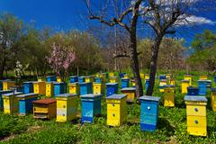 blue and yellow beehives in garden. - stock photo