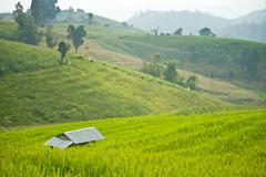 Stock Photo of terrace rice field with shack