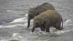 SLOW MOTION: Elephants in Indian river - stock footage