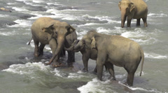 Elephant family in the river Stock Footage