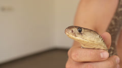 SLOW MOTION: Holding a cobra Stock Footage