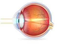 human eye cross section, normal vision - stock illustration