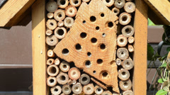 Wild bee Osmia Bicornis flying in front of insect hotel Stock Footage