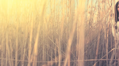 VIntage Young Woman Standing in Dry Cane UHD 4K - stock footage