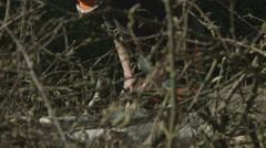 Arborist lumberjack cutting up tree 07 Stock Footage