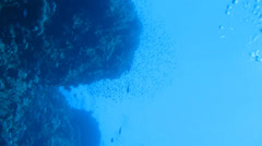 A flock of reef fish in the water column Stock Footage