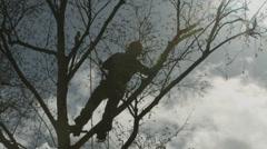 Arborist lumberjack in tree silhouetted by sun 02 Stock Footage