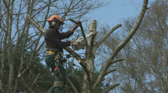 Arborist lumberjack in tree using chainsaw 01 Stock Footage
