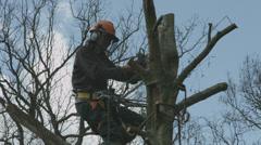 Arborist lumberjack in tree using chainsaw 05 Stock Footage