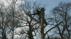 Arborist lumberjack in tree using chainsaw 06 Stock Footage