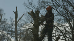 Arborist lumberjack in tree using chainsaw 07 Stock Footage