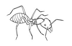 sketch of the ant - stock illustration