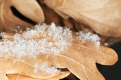 Oak leaves covered with snow flakes Stock Photos
