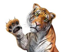 tiger close up, facing the viewer, with the right hand up and claws. - stock illustration