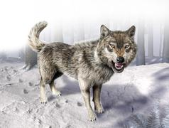 wolf growling standing on snow. - stock illustration