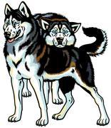 two siberian husky - stock illustration
