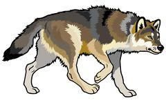 Wolf side view Stock Illustration
