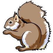Sitting squirrel Piirros