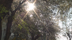 Sun Flare Trough Branches, Nature, Beautiful, Trees, Tilt - stock footage