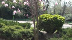 Beautiful Magnolias Nature, Sky, Beautiful, Trees, Grass, Tilt - stock footage