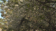 Spring Blossom, Beautiful, Branches, Nature, Trees, Tilt Stock Footage