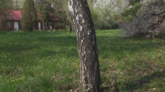 Old Tree In The Woods, Nature, Trail, Hiking, Tilt Stock Footage
