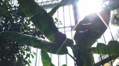 Tropical Plants In A Green House, Green, Eco, Nature, Tilt Stock Footage