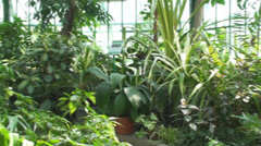 Tropical Plants In A Green House, Green, Eco, Nature, Pan Stock Footage