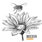 flying honey bee and blossoming flower - stock illustration