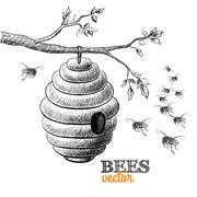 honey bees and hive on tree branch - stock illustration