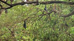 Bats hanging on a tree Stock Photos