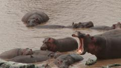 A hippo lick sweat from a another and yawns Stock Footage