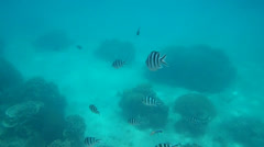 Colorful fish and corals Stock Footage