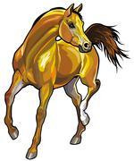 Arabian horse Stock Illustration