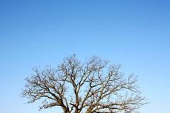 Branches of bare winter tree and blue sky background Stock Photos