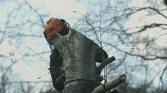 Arborist lumberjack in tree using chainsaw 08 Stock Footage