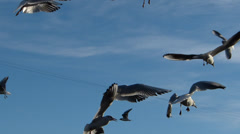 Birds in the port of Barcelona Stock Footage